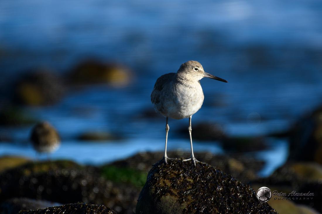 Birds in Ventura, California